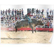 Deniliquin Rodeo 2010  rodeo, cowboys, rural, bulls Poster