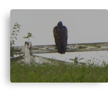 Bird on Fence Canvas Print