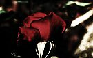 Shy Rose by Evita