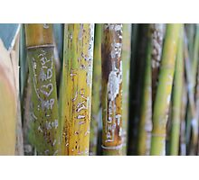 Bamboo Love Notes Photographic Print