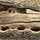 tree trunk by sendao