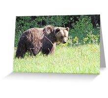 Eating Dandelions Greeting Card
