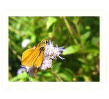 Butterfly ~ Orange Skipperling Art Print