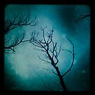 Dead trees by Aneta Bozic