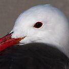 Portrait of a Heermann's Gull by Martin Smart