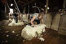 Shearing, Tooborac, Victoria, Australia by Michael Boniwell