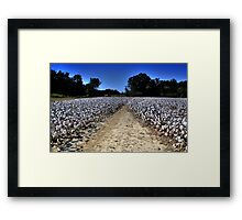 Cotton Picking Time Framed Print