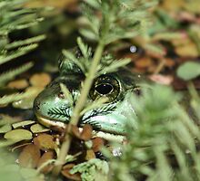 """That Handsome Frog Again! by David """"Oz""""  Osterczy"""