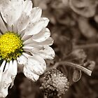 Selective flower by juando
