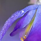 """""""Delicious Wisteria ..."""" by Rosehaven"""