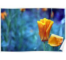 Orange Poppy in a Blue World Poster