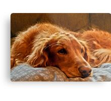 Spoiled? Not Me! Metal Print