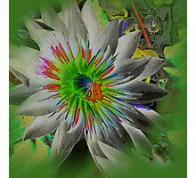 Floraley; Lily-verte Photographic Print