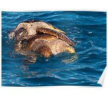 Romance amongst Green Turtles Hervey Bay Poster