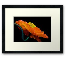 Poppy Popping Framed Print