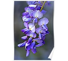 """""""For the Love of Wisteria ...."""" Poster"""