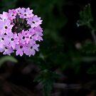 Bloom by BecQuist