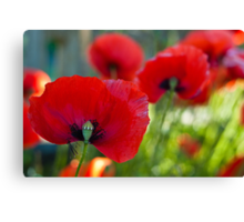 Red all over the Place Canvas Print