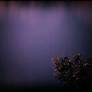 Purple skies by fourthangel