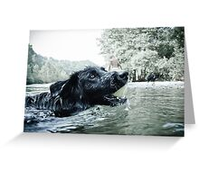 Swimming with my furry friend Greeting Card