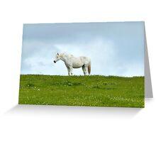 el caballo blanco Greeting Card