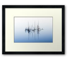 Reeds in Lake Burley Griffin - Colour Framed Print