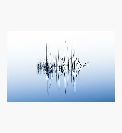 Reeds in Lake Burley Griffin - Colour Photographic Print