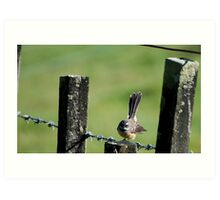 Fantail on a wire fence. Art Print