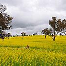 Fields Of Gold - Bathurst NSW Australia by Bev Woodman