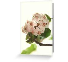 Hoya Compacta - Waxplant - Porzellanblume Greeting Card