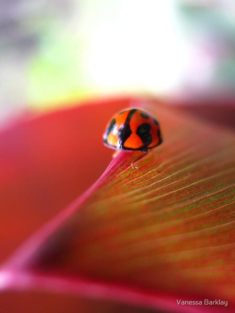 Ladybird on Cordyline by Vanessa Barklay
