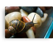 Macro Garden Snail Canvas Print