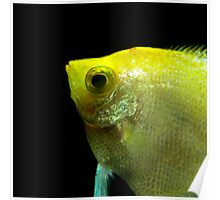 Underwater World : Profile In Yellow Poster