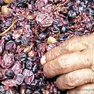 The Wine Makers Hands by Hazel Dean