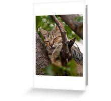 Grecian Cat Nap Greeting Card
