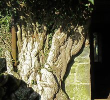 The gnarled tree by sarnia2