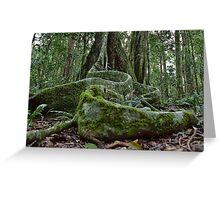 Booyong Tree,Lamington NP,Australia Greeting Card