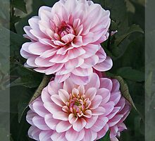 Garden art - dahlias in the dark by Luisa Fumi