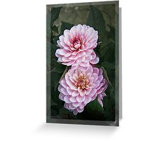 Garden art - dahlias in the dark Greeting Card
