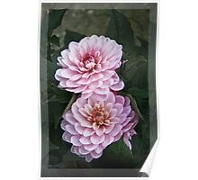 Garden art - dahlias in the dark Poster