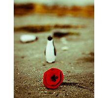 Penguin & poppy Photographic Print