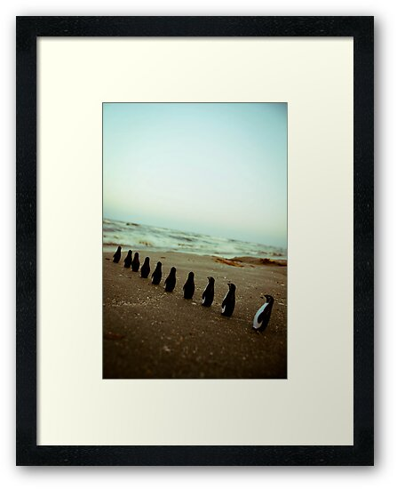 Penguin march by iulix