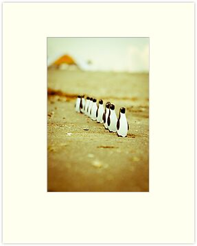 Penguins going for a walk by Iuliana Evdochim