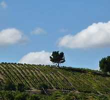 Tree on the hill by solena432