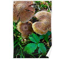 Fungi Time Poster