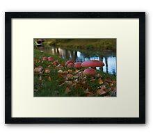Amanita in a park Framed Print
