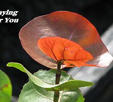 Comfort series: Praying For You by hummingbirds