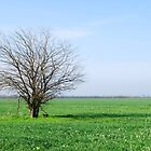 Tree in the field by Dfilyagin
