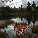 Peck Lake Algonquin Park Ontario Canada by creativegenious