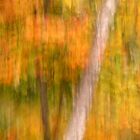 Autumn Abstracted by Gina Ruttle  (Whalegeek)